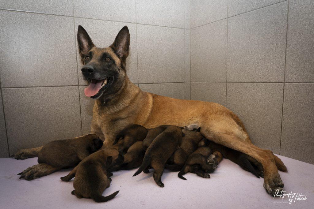 Pups Lara & Linck 1 week oud
