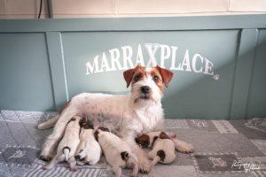 Pups Quest & Igor 4 dagen oud