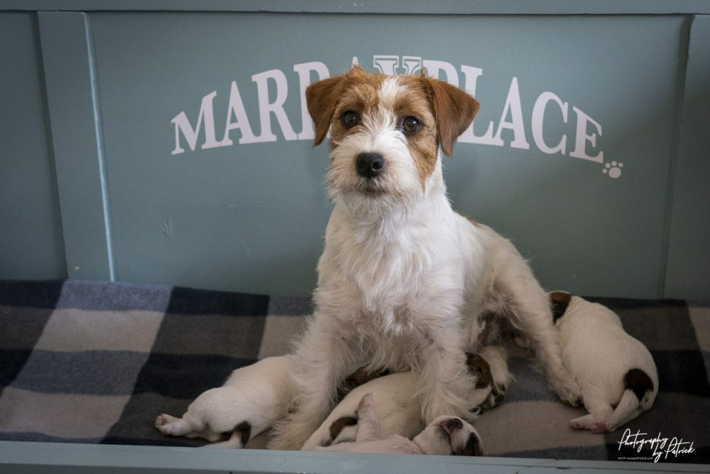 Pups Quest & Igor 11 dagen oud