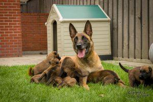 Pups Lara en Linck 3 weken oud