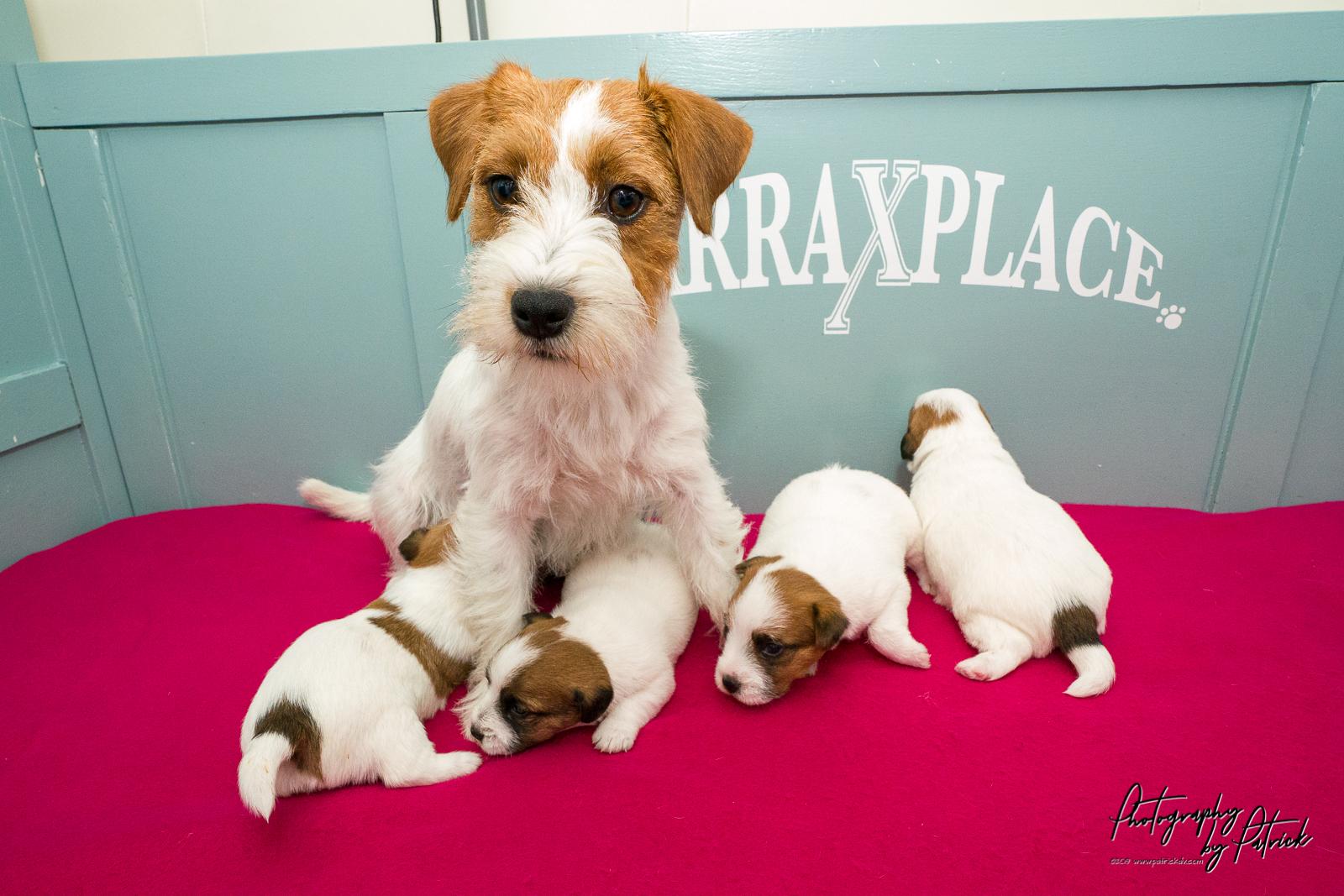 Pups Quest & Igor 18 dagen oud