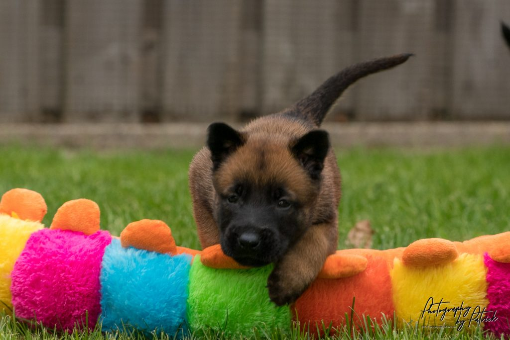 Pups Lara & Linck 4 weken