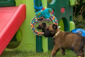 Pups Lara & Linck 5 weken