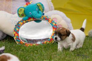 Pups Quest & Igor  4,5 week