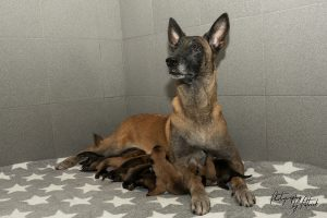 Pups Noah en Linck, 4 dagen oud