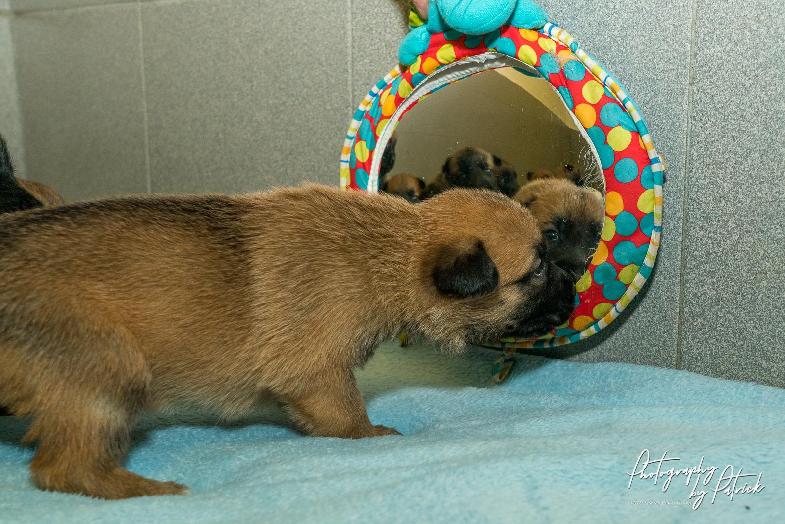 Pups Noah – Linck 3 weken oud