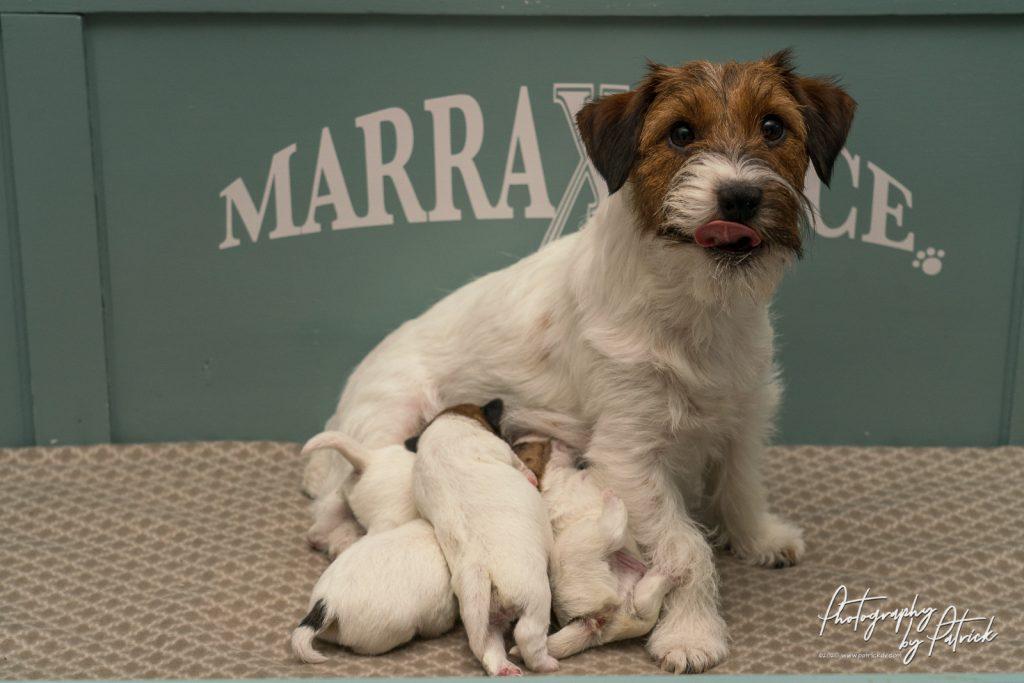Pups Zara – Gino, 1 week oud