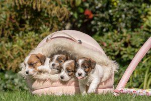 Pups Zara – Gino 5 weken oud, voor het eerst buiten