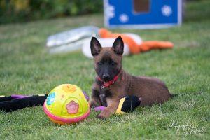Pups Nyka – Ramsack 6 weken oud