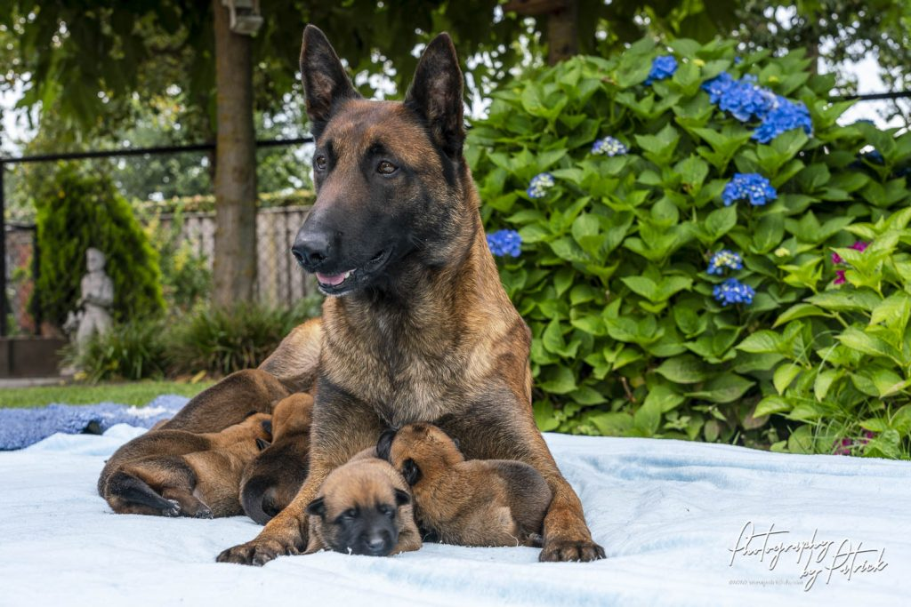 Pups Pepper – Brixx 1 week oud