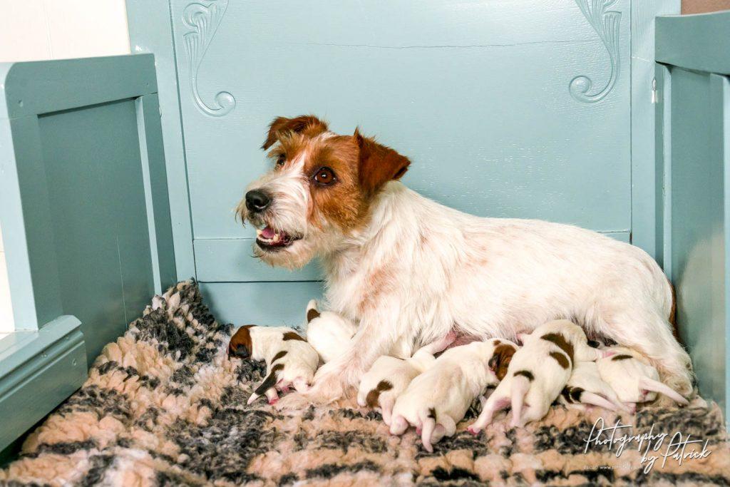 De pups van Maggie & Gino zijn geboren