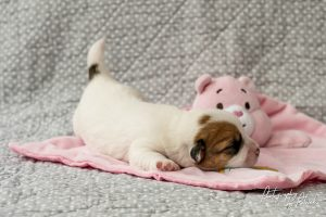 Pups Maggie & Gino 1 week oud