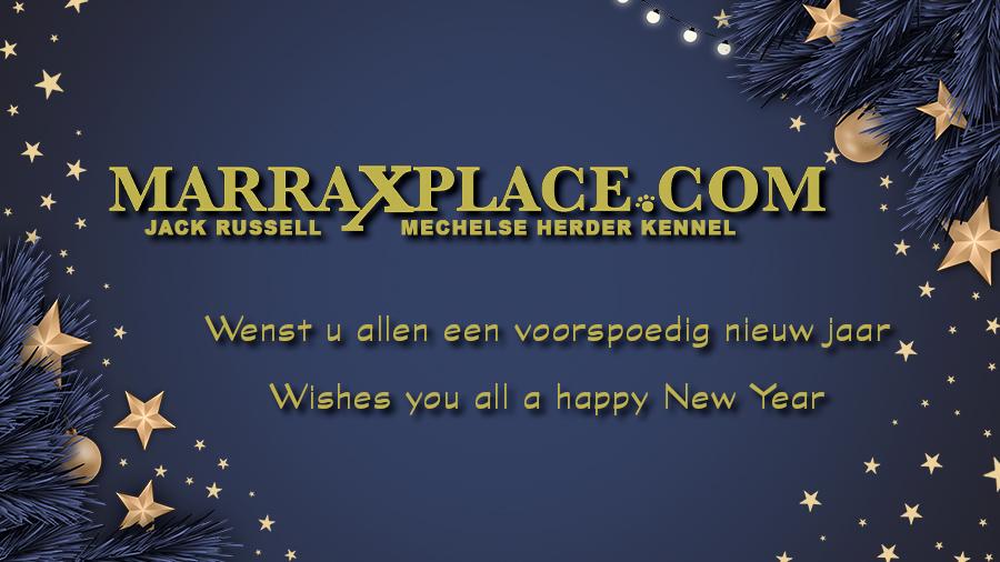 Nieuw jaar Nieuwe website !!