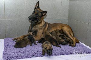 Pups Pari & Brixx 2 weken oud, de oogjes gaan open