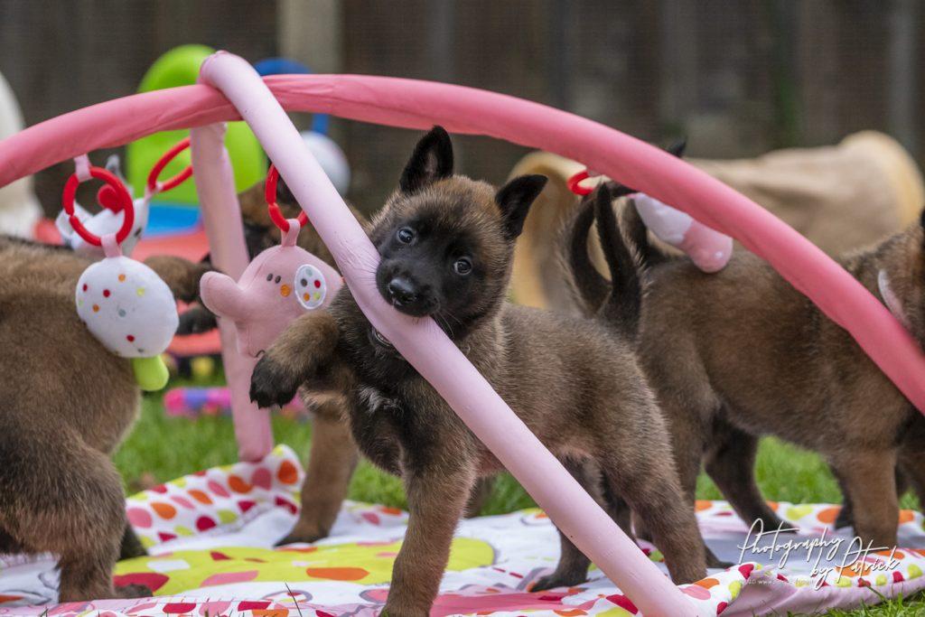 Pups Pari en Brixx, 5 weken oud