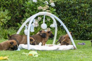 Pups Pepper en Brixx 4 weken oud