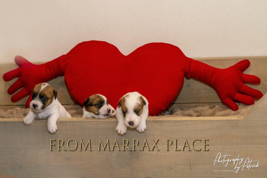 Pups Maggie en Gino 3 weken oud