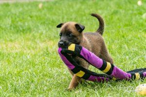 Pups Pepper en Brixx, 5 weken oud