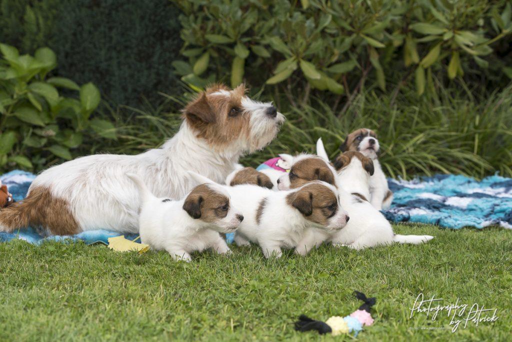 Pups Maggie en Gino, 4 weken oud