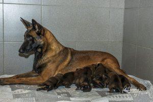 Pups Pari-Brixx 1 week oud