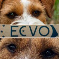ECVO Oogtest Zara & Quest