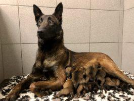 De pups van Red dag 1