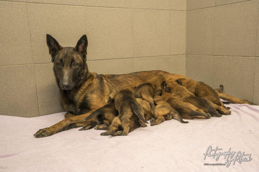 Pups Red en Ramsack 19 dagen oud