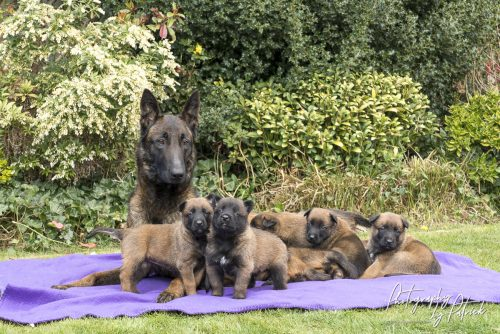 Pups Red en Ramsack, bijna  4 weken oud