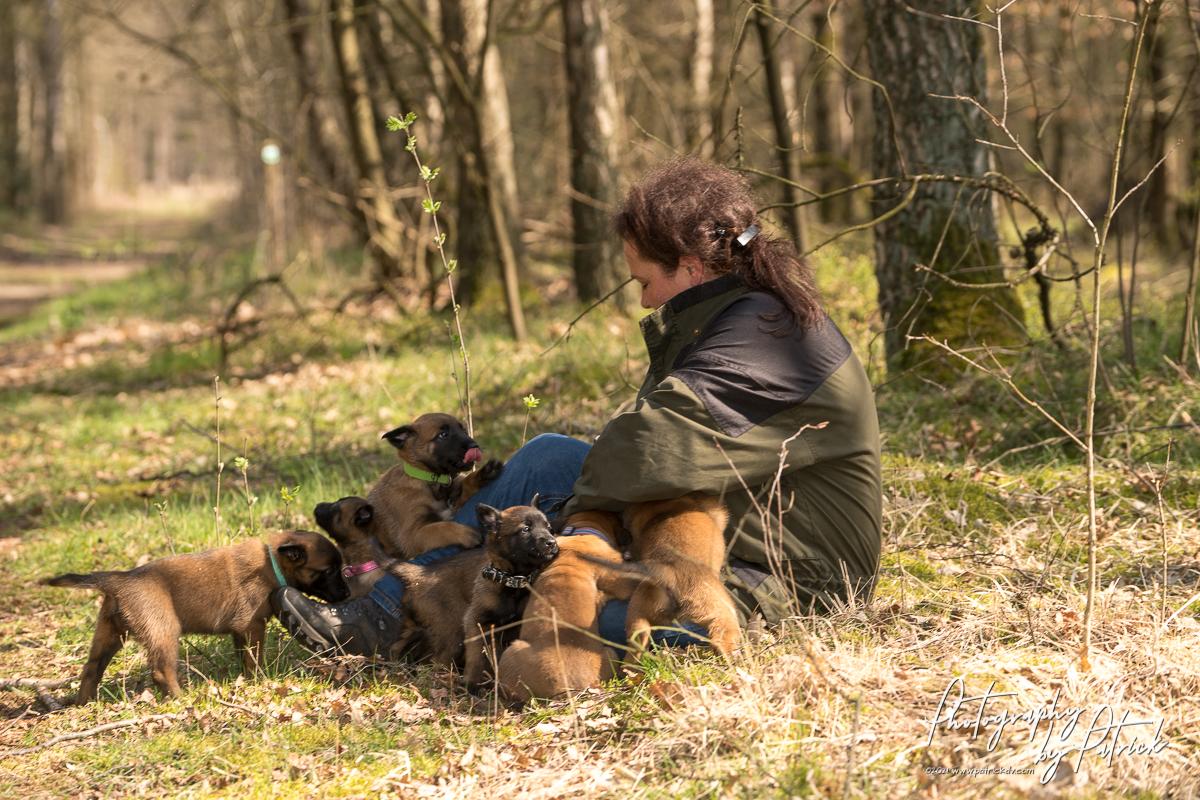 Pups Red & Ramsack bijna 6 weken, eerste boswandeling