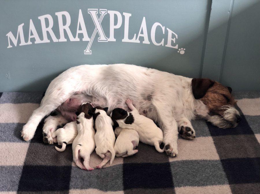 Pups van Zara zijn geboren