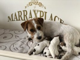 Ook de pups van Quest zijn geboren!