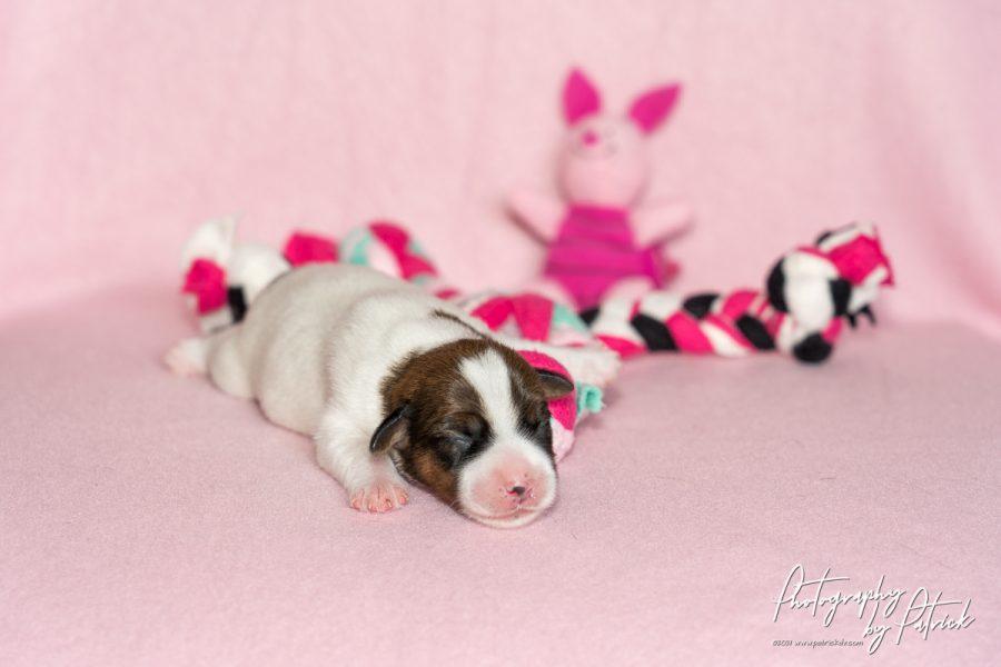 Pups Zara en Gino, 4 dagen oud