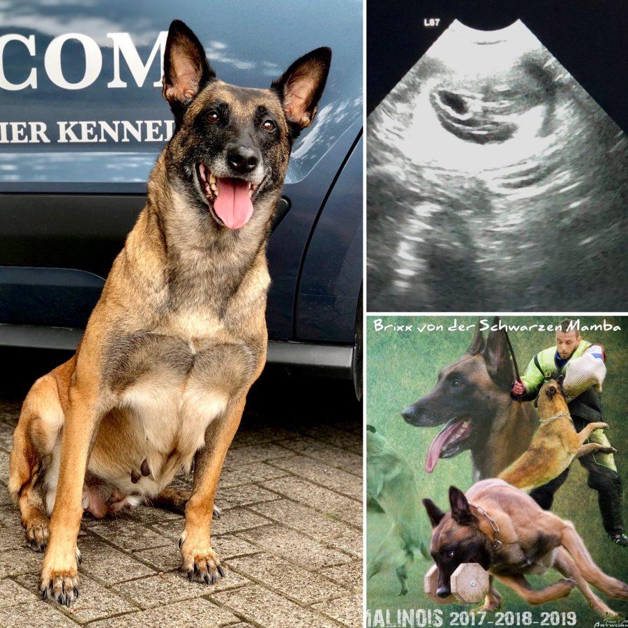Nyka is zwanger!!