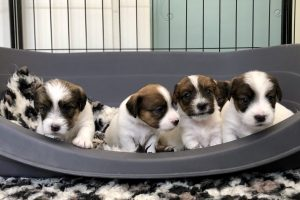 Pups Zara en Gino, 25 dagen oud