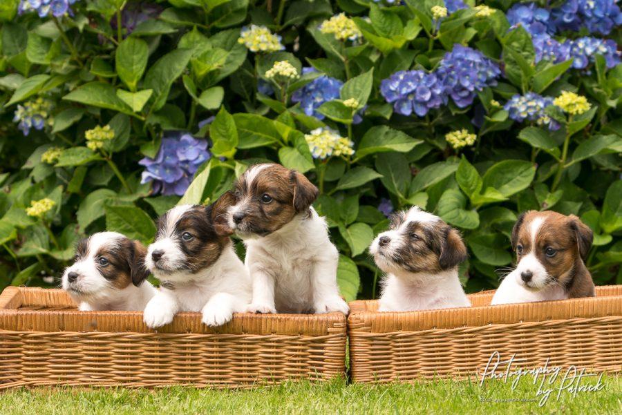 Pups Zara en Quest genieten van de zon