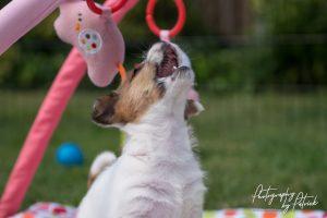 Pups van Zara 7 weken en van Quest 6 weken in de Marraxplace avonturentuin