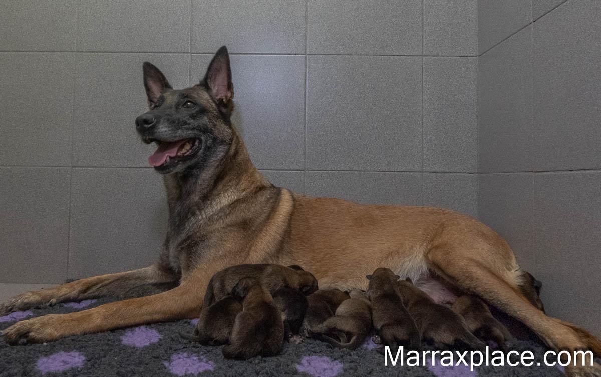 Pups Nyka & Brixx, 2 dagen oud