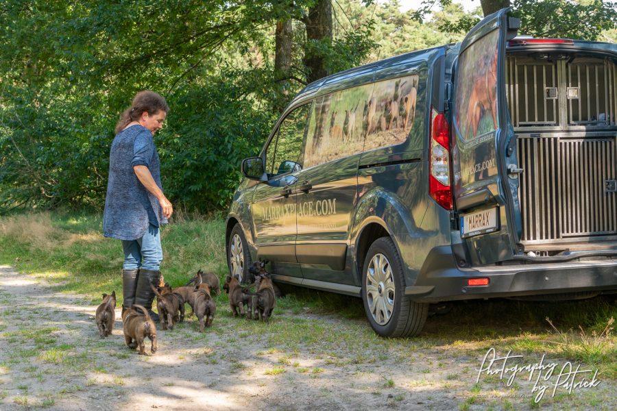 Pups Nyka en Brixx 6 weken oud, eerste boswandeling