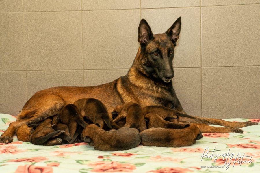 Pups Pari en Ramsack, 2 weken oud